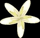 flor-listado