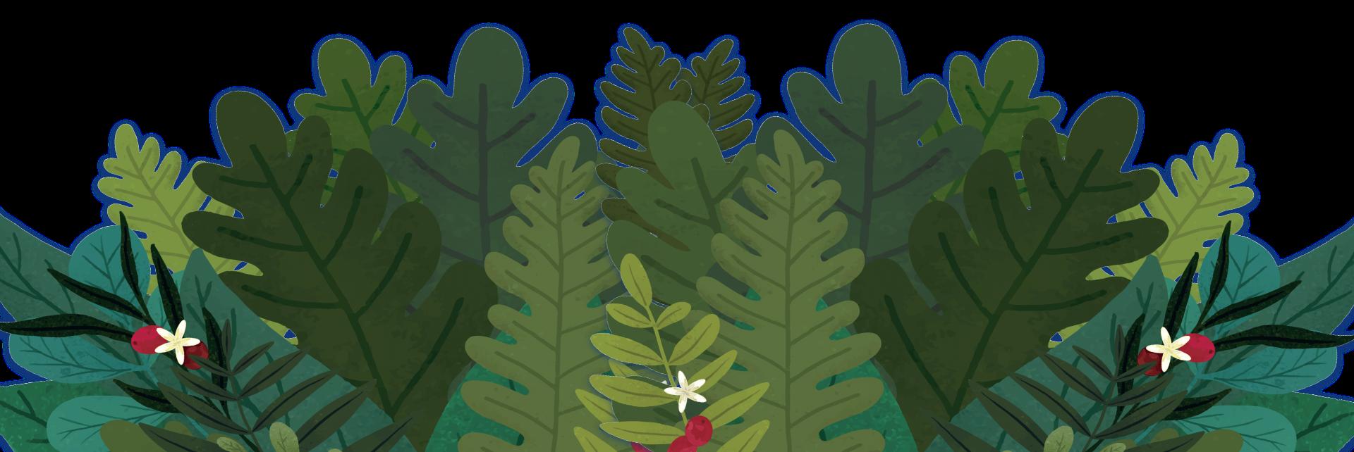 plantas_pie